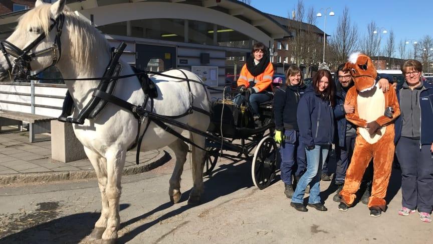 Hästen Groms tillsammans med skötare och Bostadsbolagets personal. Medverkar gör även den klappvänliga hästen Broms.