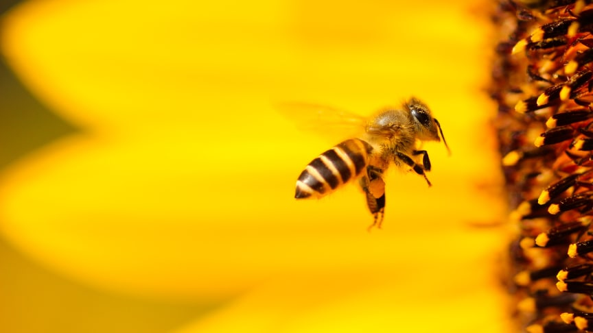 IPBES öppnar våra ögon för hotet mot biologiska mångfalden – vinner WIN WIN Gothenburg Sustainability Award 2020