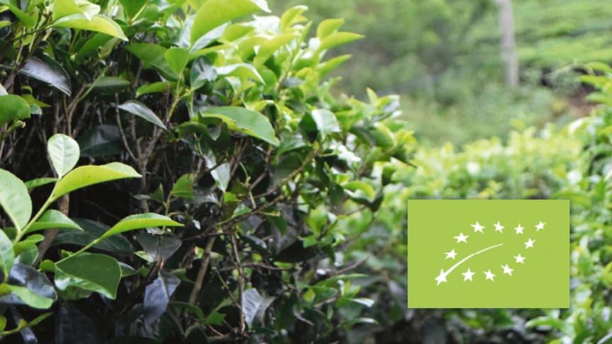 Så ökade vi vår försäljning av ekologiska teer under 2018