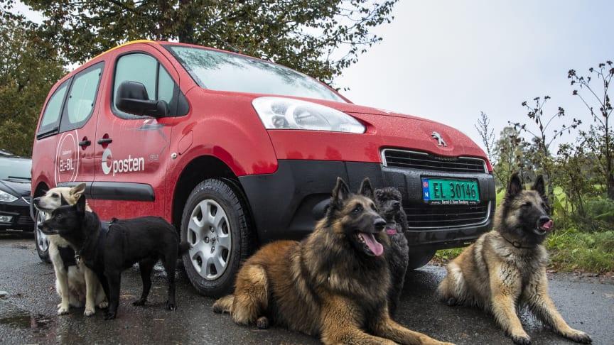 Tusenvis av hundeeiere ønsker at deres kjæledegge skal komme på frimerke som Posten gir ut i 2020. Foto: Håvard Jørstad