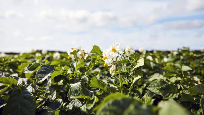 FødevareBanken og Flensted har besluttet at styrke deres samarbejde og indgå et erhvervssamarbejde, der kan være med til at få FødevareBankens kølebiler til at rulle.