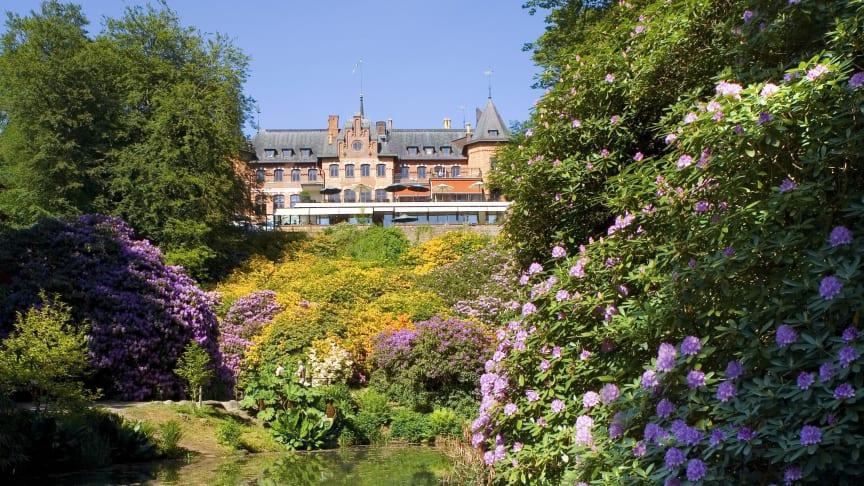 Rhododendron i ravinen