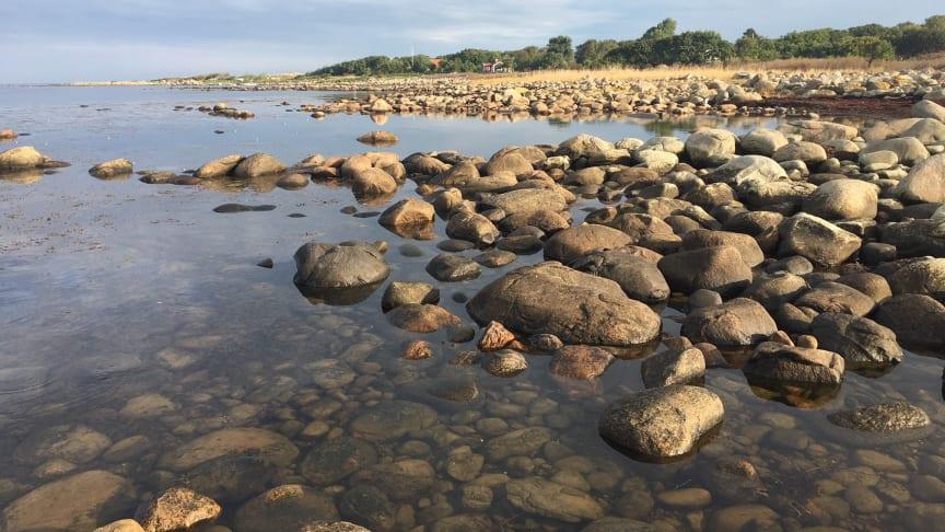 Pressinbjudan: Välkommen till invigning av Magnarps strandmarker