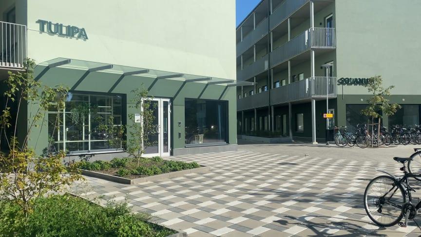 ByggVesta inviger Colonia II i Linköping – ett studentbostadsområde som skapar campuskänsla på riktigt