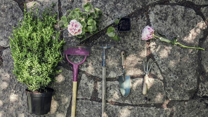 Hemfrid re-lanserar trädgårdstjänster - och adderar robotgräsklippare från Husqvarna