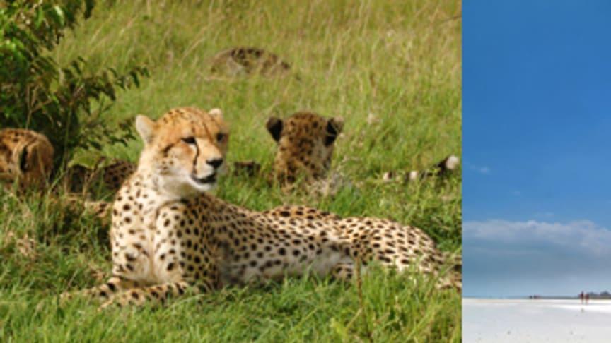 Nyhet vintern 12/13: Enveckascharter till Kenya