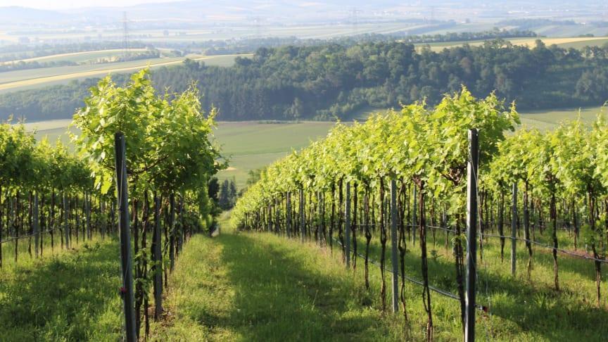 Schloss Bockfliess vinmarker med sørvendte skråninger ned mot slettene i Marchfeld-området. Den store Hochleiten-skogen beskytter vinmarkene mot vind og jordmonnet består av dyp finkornet jord. En perfekt vinmark å dyrke Riesling på i Østerrike.