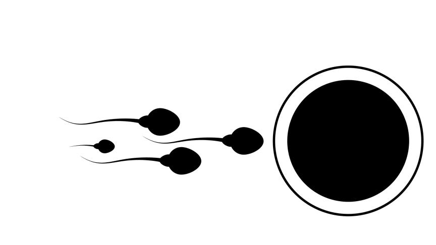 Olika ägg föredrar olika spermier