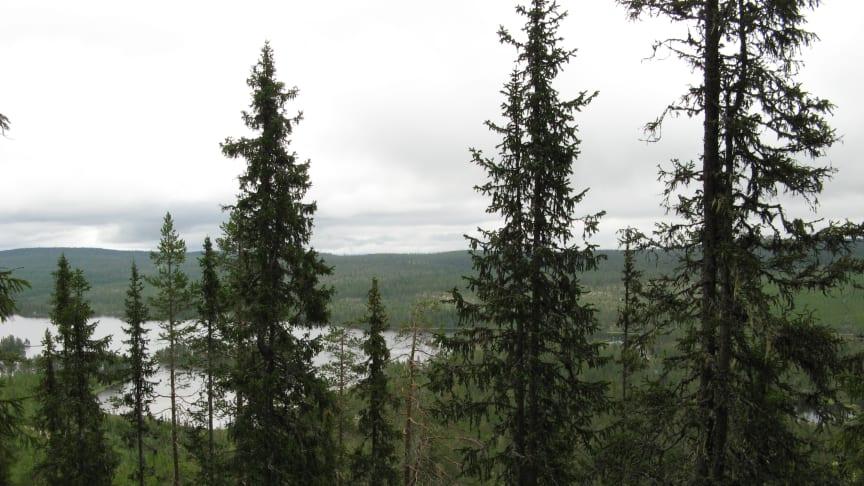 Bild tagen i det nya naturreservatet Knittarna. Foto: Länsstyrelsen i Dalarnas län