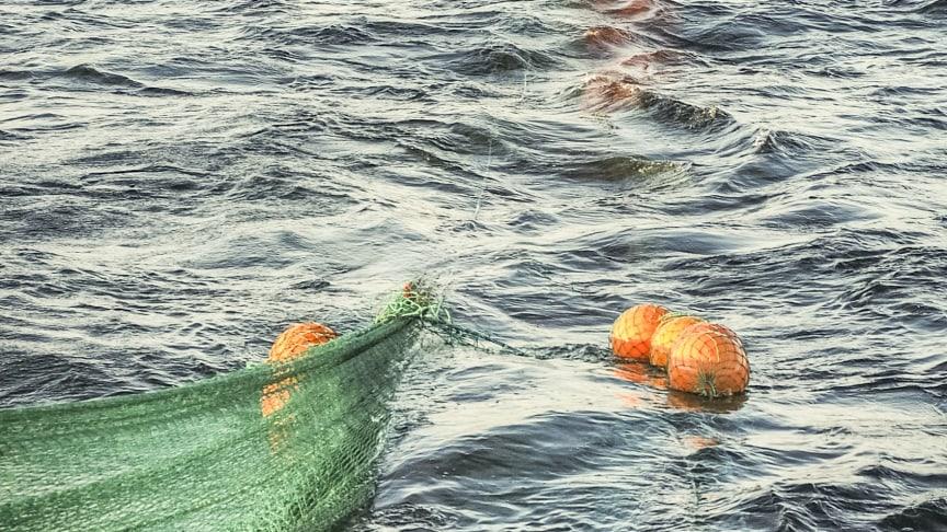 Minskade kvoter för torskfisket men ökade kvoter för sillfisket i Östersjön