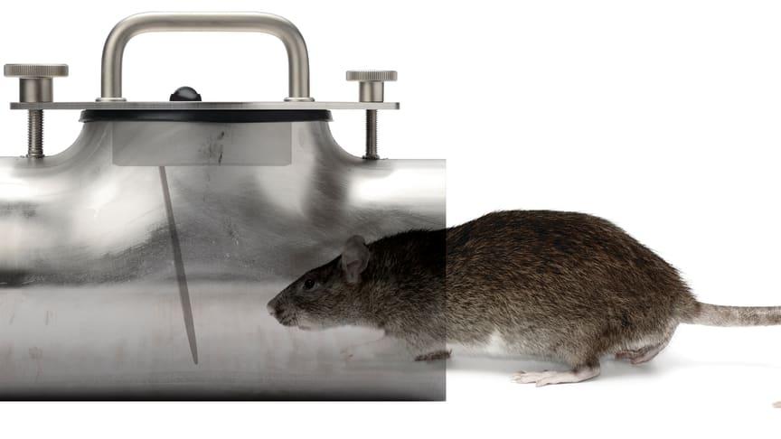 Råttproblem? Jafo Rat-Exx är lösningen!
