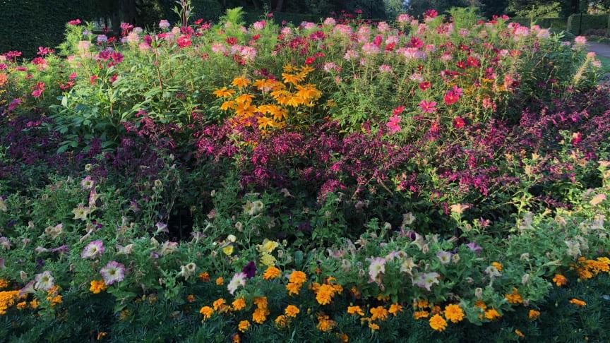 Sommarflor i full blom i Slottshagen