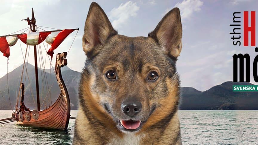 Välkommen till Stockholm Hundmässa 2017