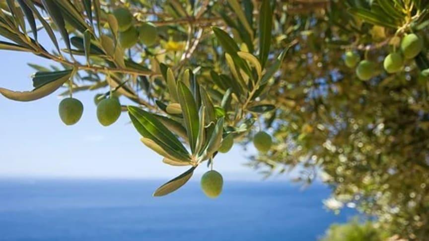 Accademia Olearia på Sardinien investerar i oliveCEPT®