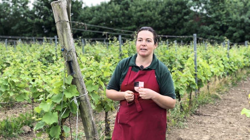 Anette Ivarsson på Arilds vingård driver Sveriges största vinodling. Foto: Anna Lind Lewin.