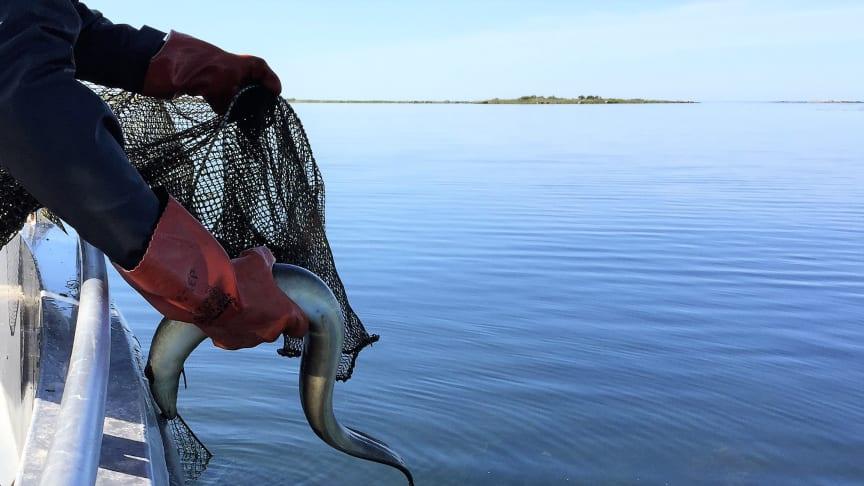 Foto: Havs- och vattenmyndigheten