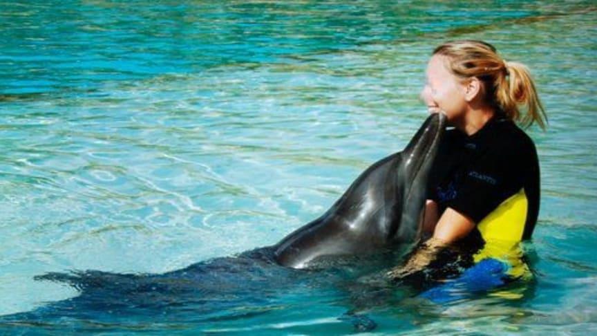"""Von der sengenden Sonne schwarz verfärbter Delfin im """"Dolphin Bay""""-Delfinarium in Dubai"""