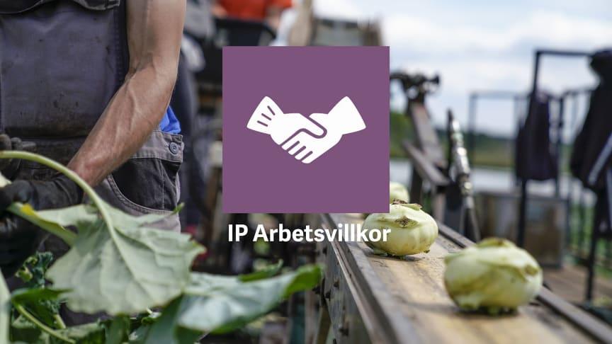 Säsong 2020 ska SydGrönts odlare vara certifierade med IP Arbetsvillkor