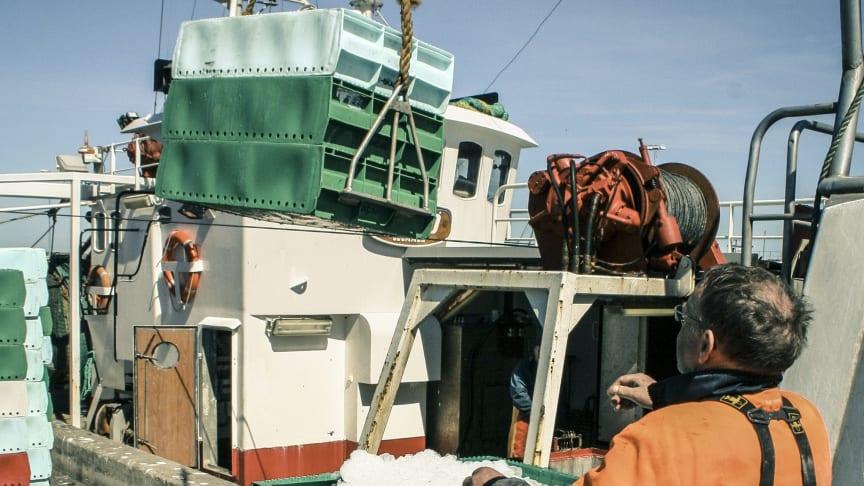 """Nya regler för svenskt fiske vid årsskiftet - """"Målet är att minska utkast och få ett mer selektivt fiske"""""""