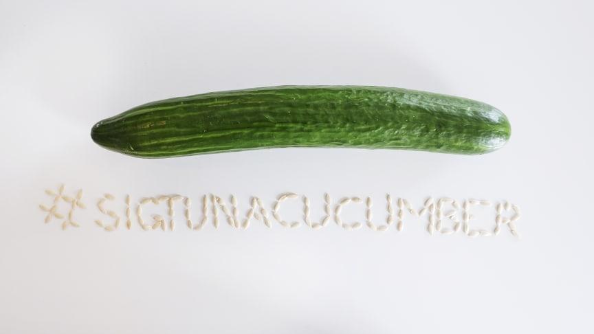 Vem kan odla Sveriges största gurka?