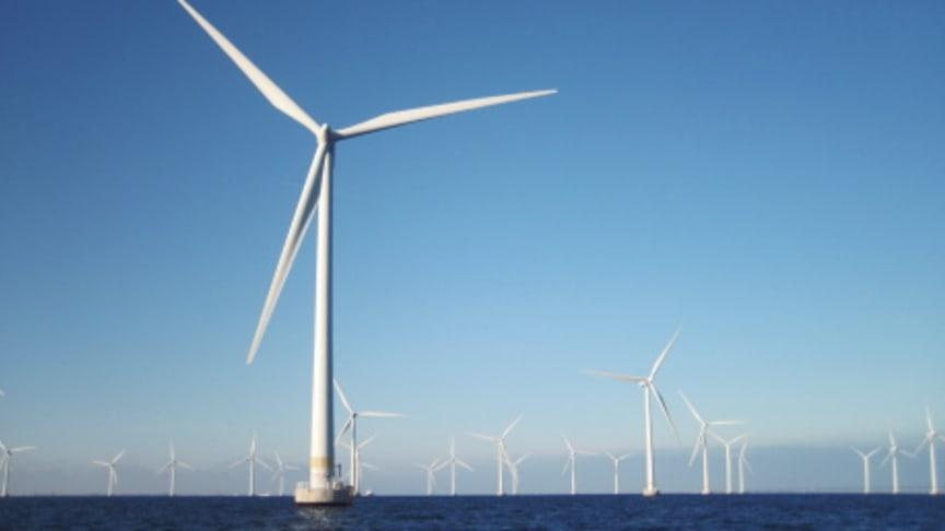 Liten risk för skador av vindkraft på marint liv