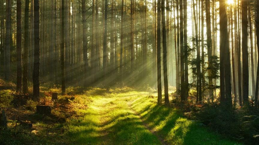 Skogsfastighetsmarknaden är glödhet