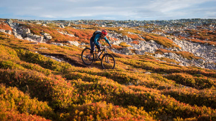 Høstfjellet i all sin prakt! Foto: Ola Matsson