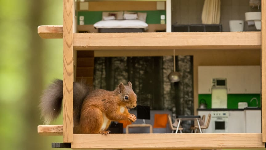 Spotting red squirrels is a hard nut to crack for a quarter of British adults who have never seen one in their lives