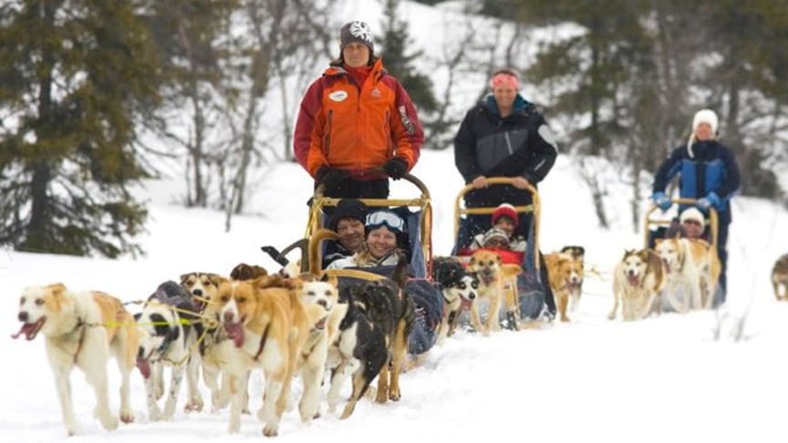 Get your SkiStar holiday off to a flying start with a dog sled transfer