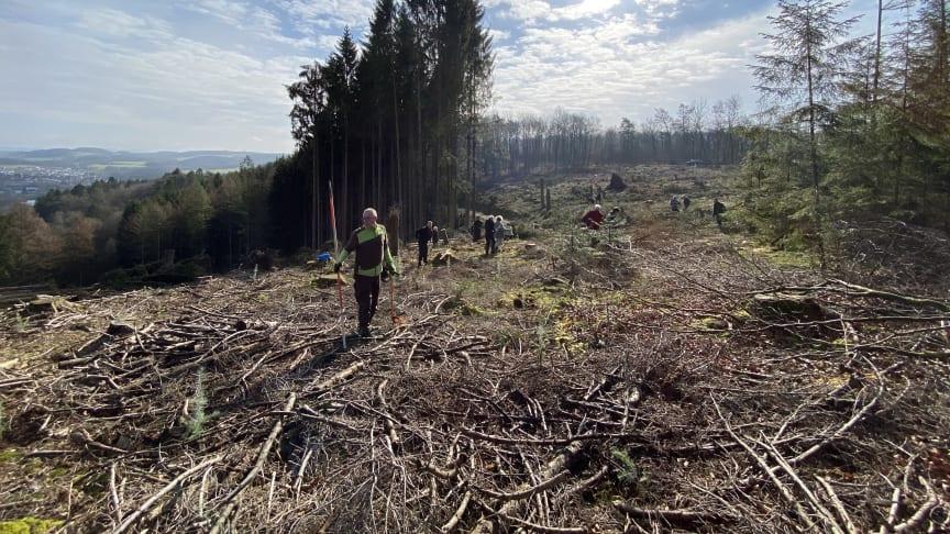 BPW Mitarbeitende, Geschäftsführung, Facility Management und Forstamt packen gemeinsam an, um die regionalen Wälder aufzuforsten