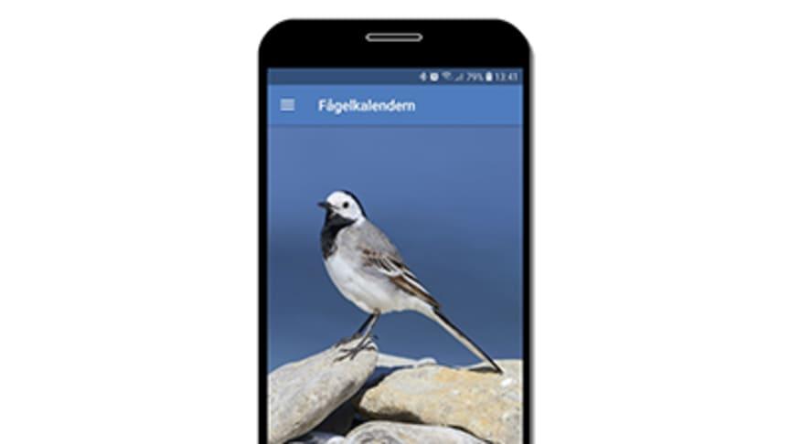 Mobilapp för Fågelkalendern. Illustration: Ola Langvall, SLU