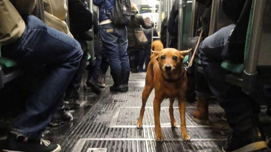 Värsta platserna för den som har allergi mot hundar
