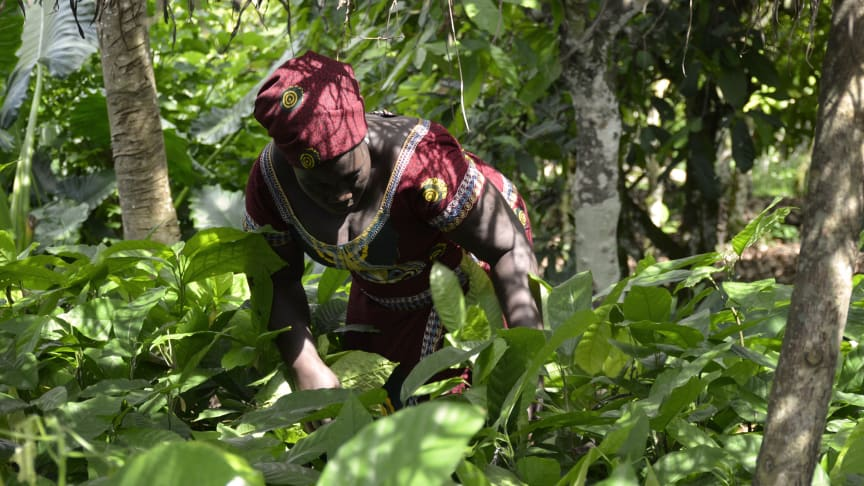 Mondelēz International reports on actions to scale up forest protection in cocoa growing areas, address climate change and reduce emissions