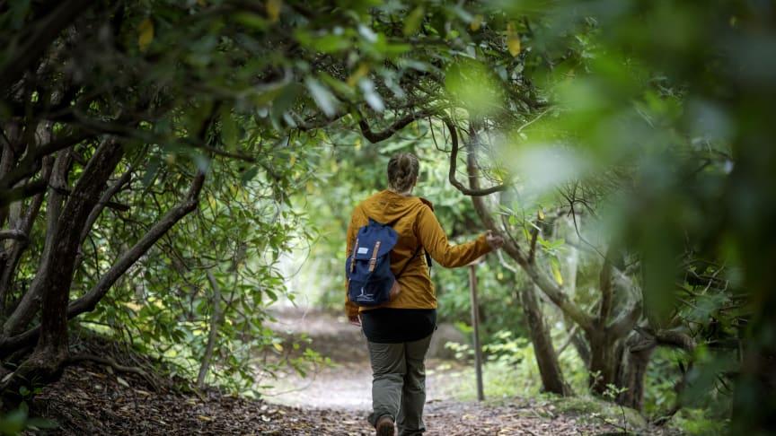 Samtliga sträckor av den nya Trollstigen passerar genom Rhododendron-dalen. Foto: Tobias Andersson/Next Skövde