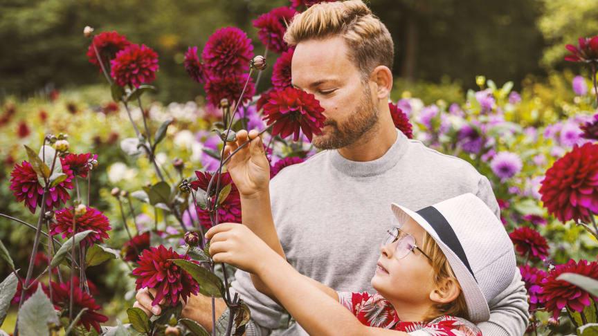 Trädgårdsveckor med blomstrande inspiration