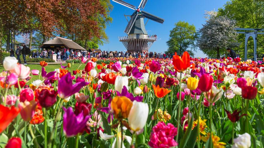 5 anledningar att resa till Holland med Scandorama i vår! 🌷