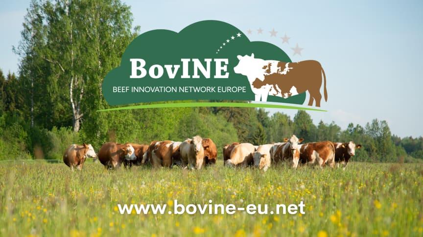 BovINE: Beef Innovation Network Europe