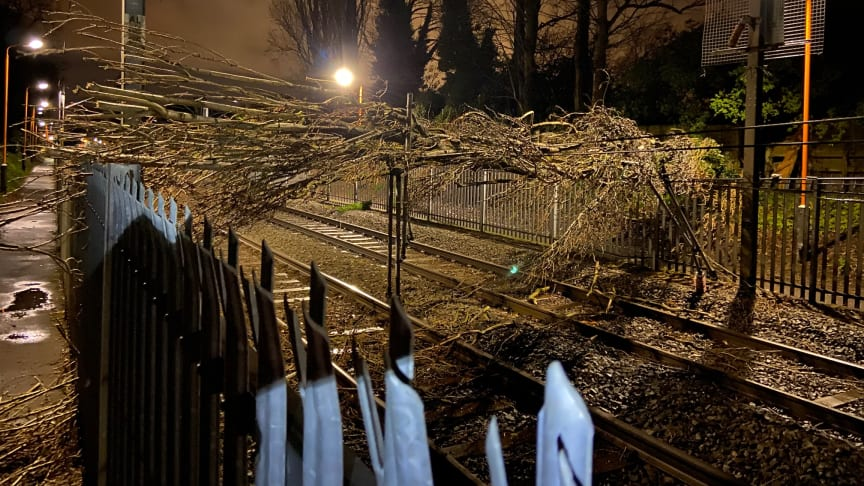 Fallen tree at Wylde Green brought down power cables