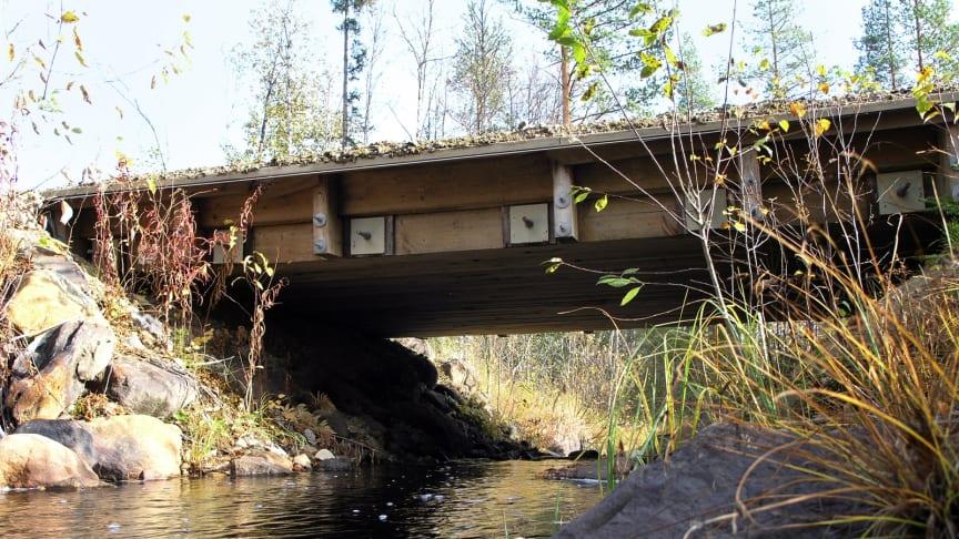 Naturen mår bra under träbroar