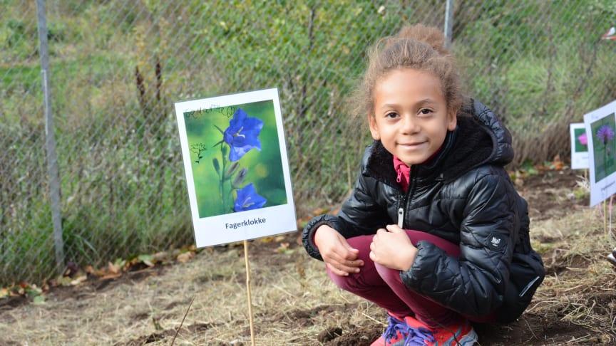 Samantha går i 2. klasse på Grefsen skole og plantet i dag en fagerklokke som en del av prosjektet Humlevennlige skoler.