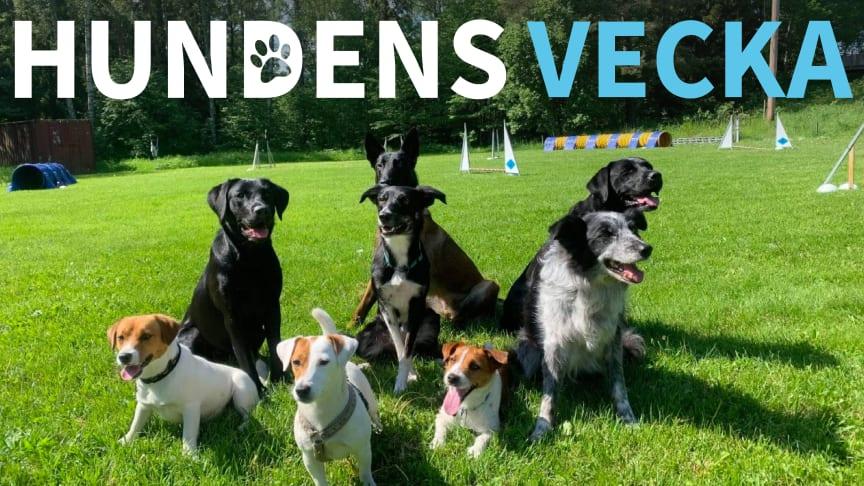 Bild från medverkande Roslagens Brukshundklubb.