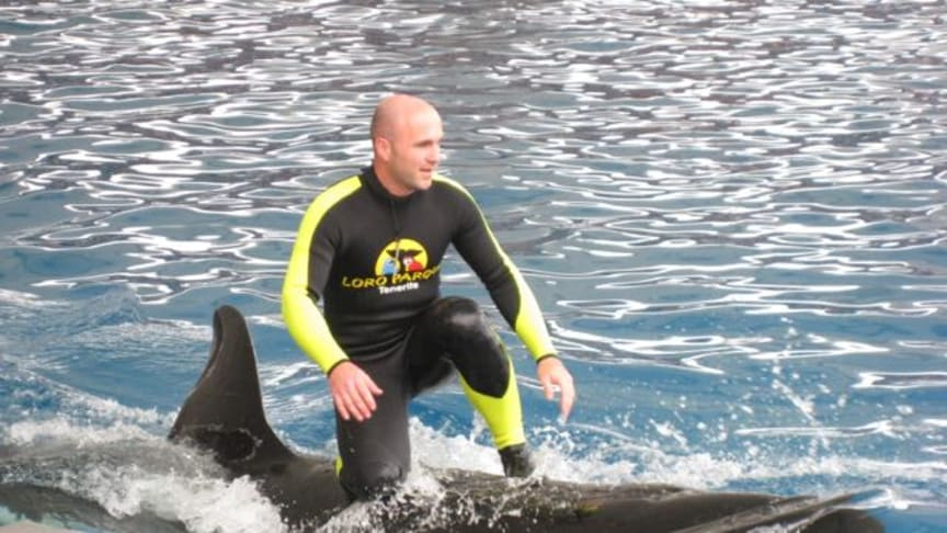 SeaWorld gives up breeding Orcas, Zoos in Nuremberg and Duisburg under pressure (English and German)