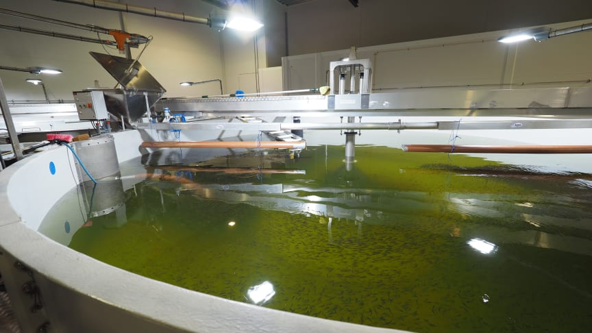 Lerøy Sjøtroll Kjerelva på Stord: Ett av de første fiskekarene i anlegget er allerede i drift.