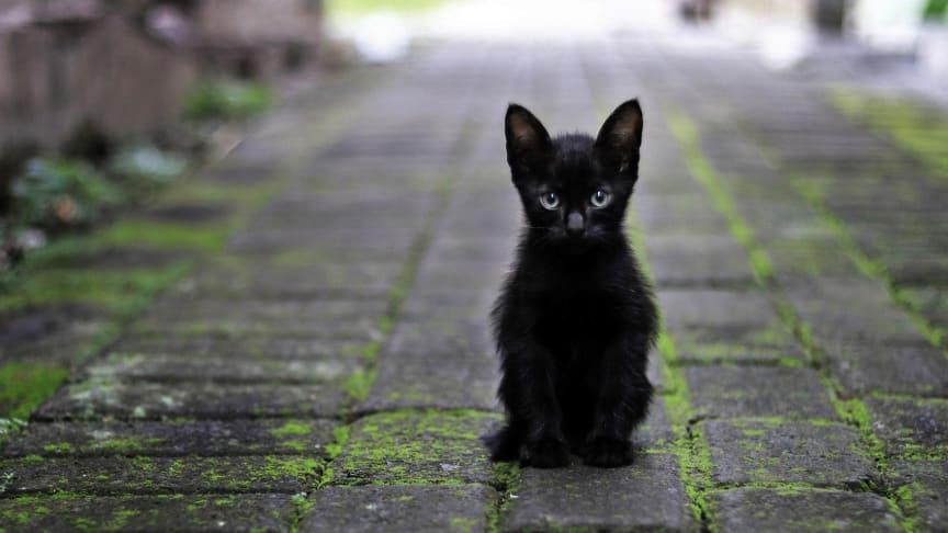 Wohl doch viel harmloser als gedacht: Ein Freitag, der dreizehnte ist kein Grund, sich vor schwarzen Katzen zu fürchten.