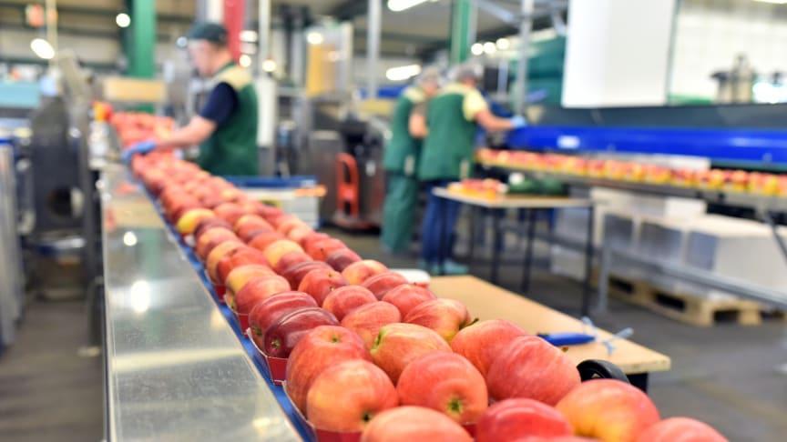 Onlineutbildning på engelska! Food Safety and HACCP - The Basics