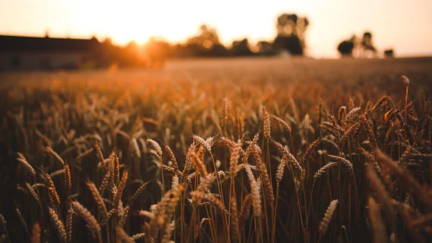 Lantbrukets lönsamhet 2020 visar lönsamheten inom lantbrukets driftsinriktningar mjölk, nötkött, gris och växtodling.