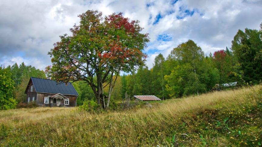 Anlegget på Abborhøgda forteller om skogfinsk kultur. Foto: Torkel Skoglund