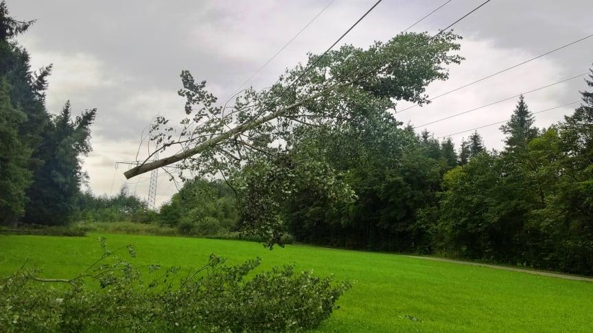 Nur etwas für Forstprofis: Baumarbeiten in der Nähe von Freileitungen sind lebensgefährlich.