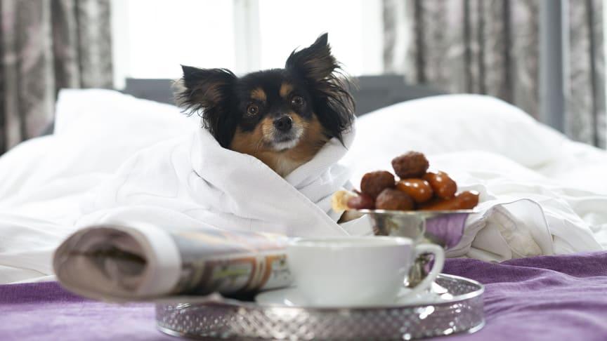 Ett 70-tal av Best Western Hotels & Resorts hotell i Sverige är hundvänliga.