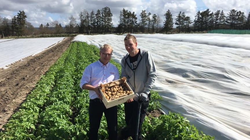 Potatisodlare Ted Ivarsson tillsammans med Hemköps representant Marcus Regnander